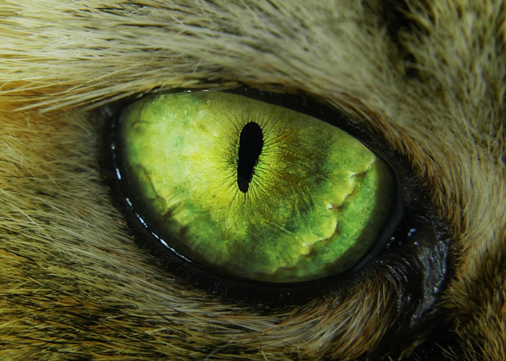 greeneye envy